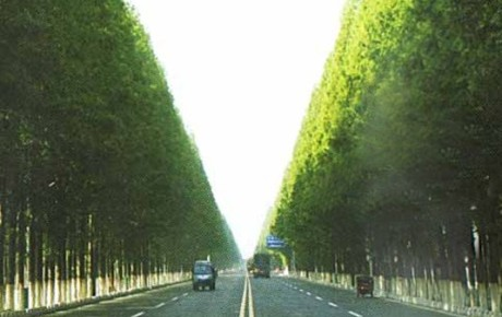 Pizhou – The Worlds Longest Tree Avenue