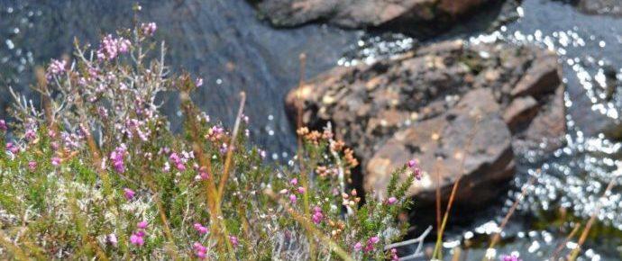 Environment Bill: Biodiversity Metric 'Net Gain'